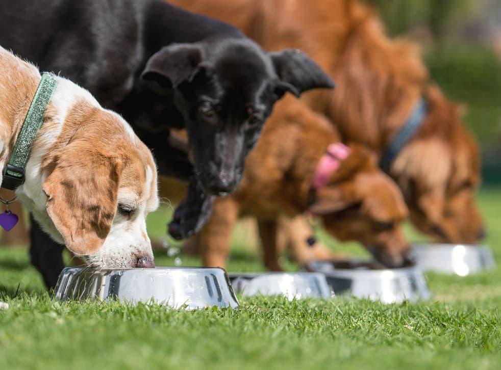 Un estudio demuestra que la comida cruda para perros contiene bacterias resistentes a los antibióticos