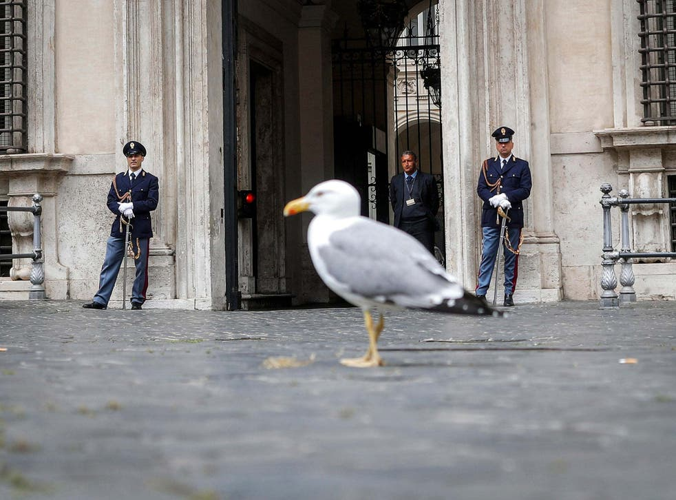 A seagull walks in front of Palazzo Chigi during Italian cabinet meeting in Rome