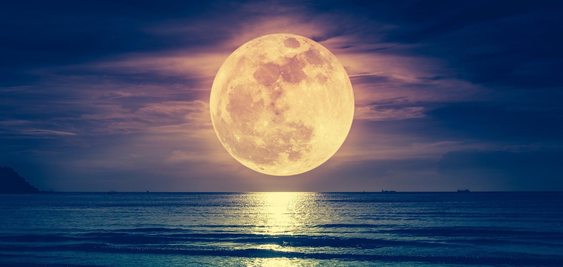 A última chance de ver a lua rara de flores em toda a sua glória