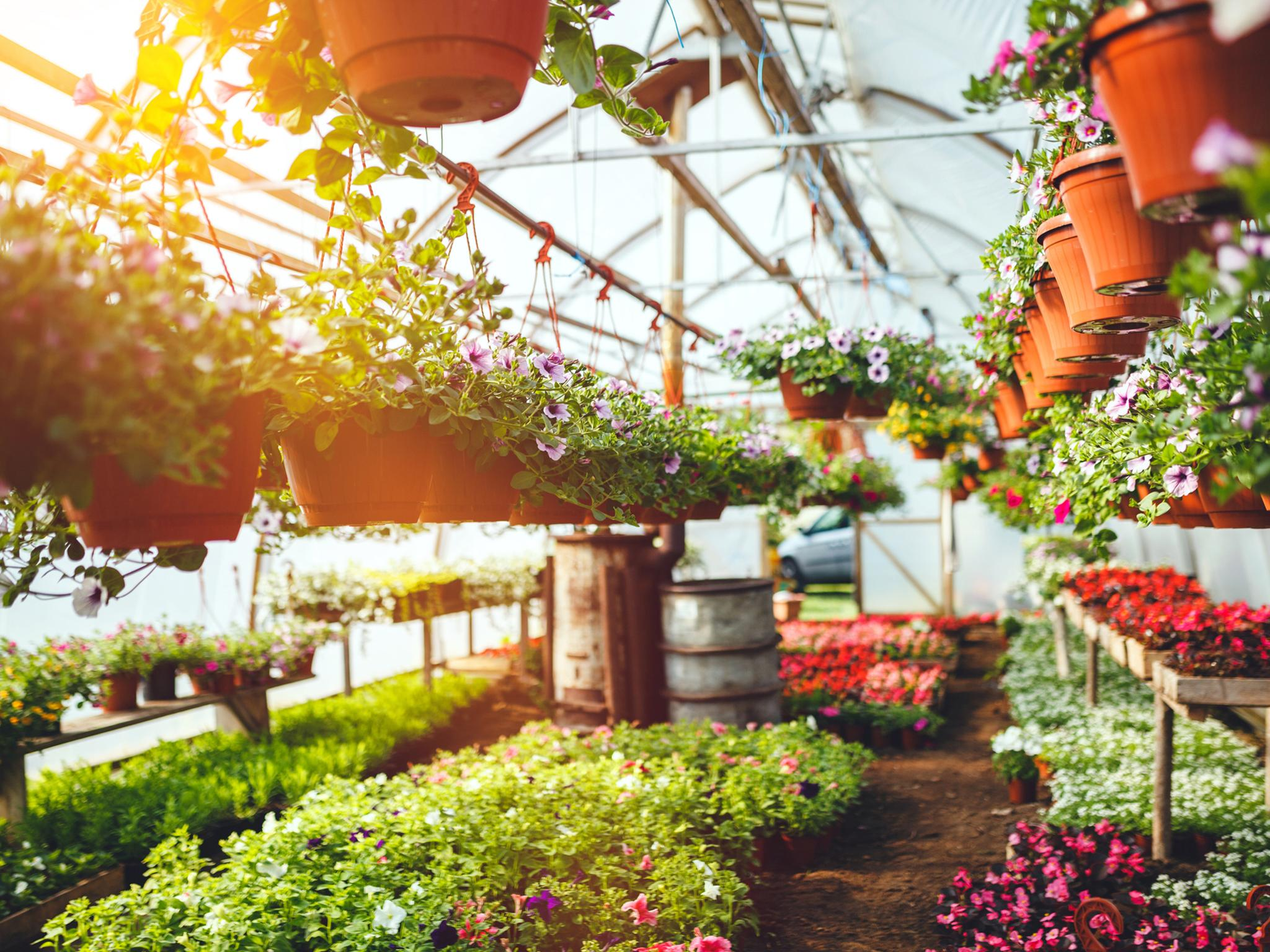 Garden Centres Reopening Everything You Need To Know The Independent