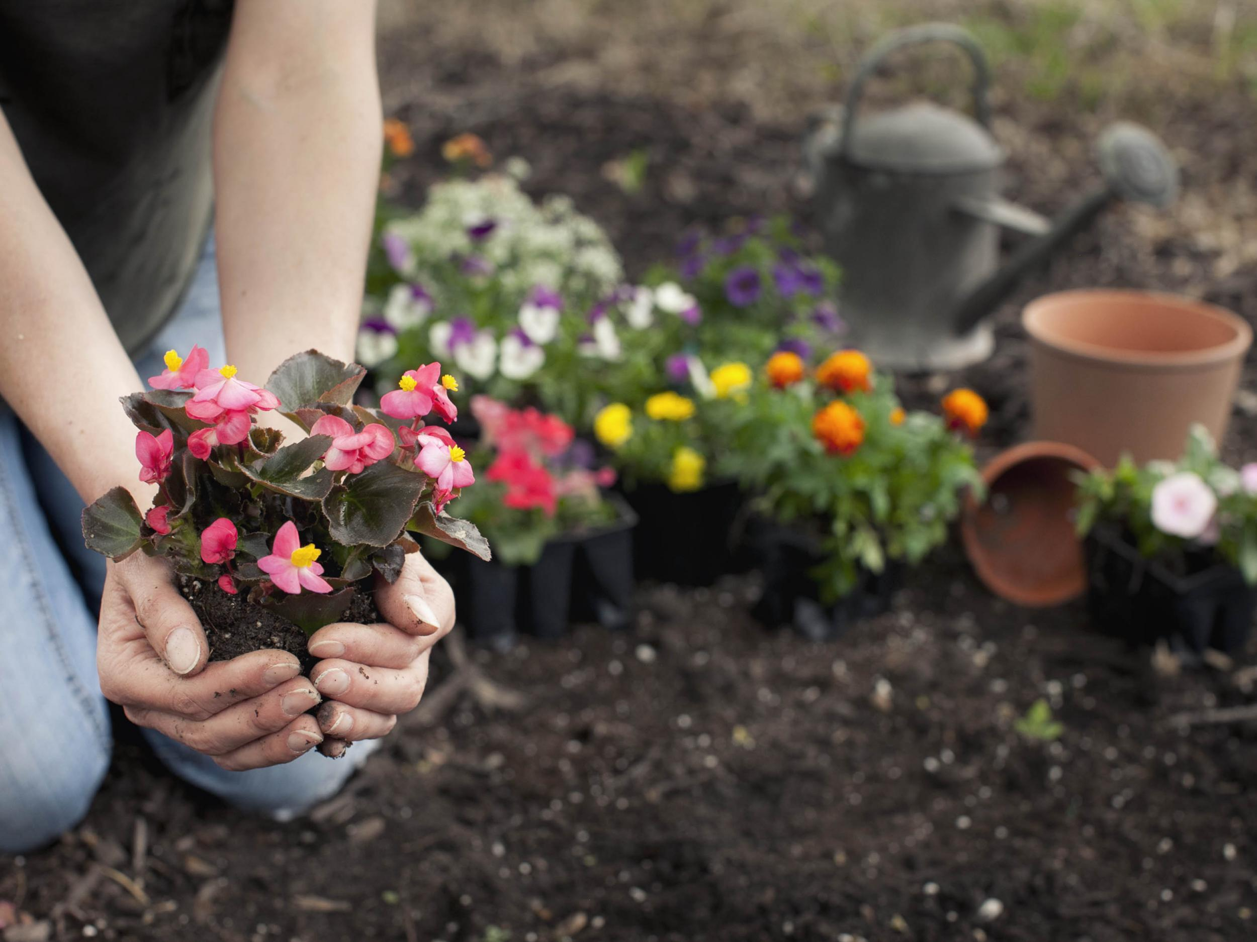 Garden Centres The Plants And Flowers To Buy Now In Time For The Summer The Independent