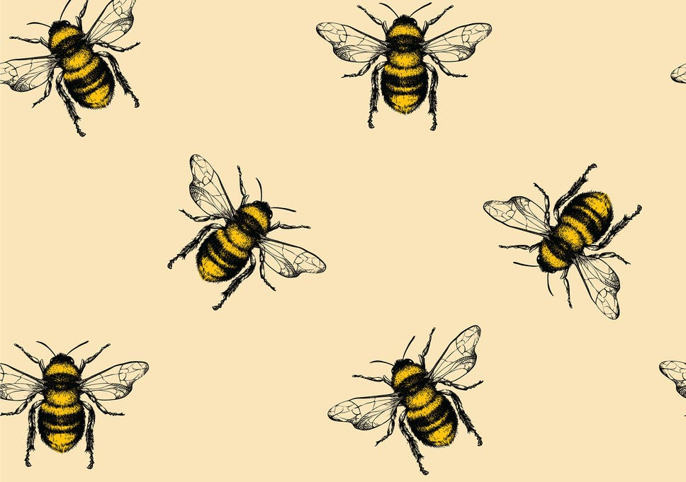 Bee a hero and help protect this endangered species