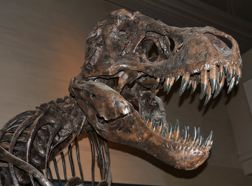 Big animals with fast metabolisms – such as tyrannosaurs or humans – require lots of food