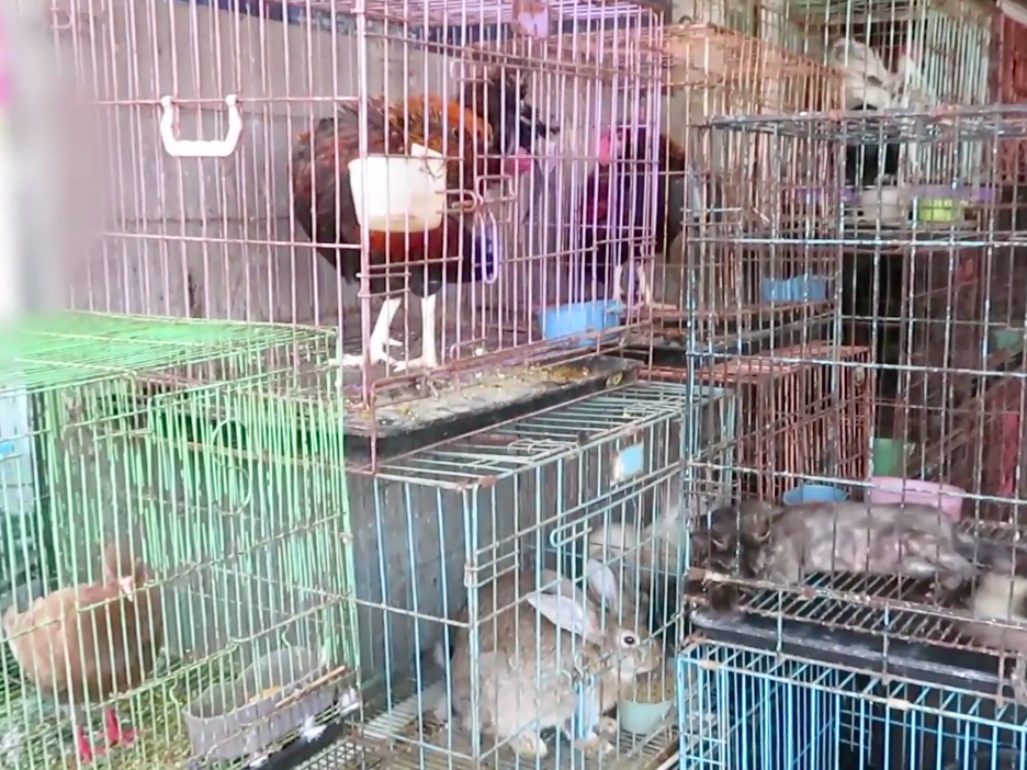 Indonesia markets still selling reptiles, rabbits and birds in filthy cages despite pandemic