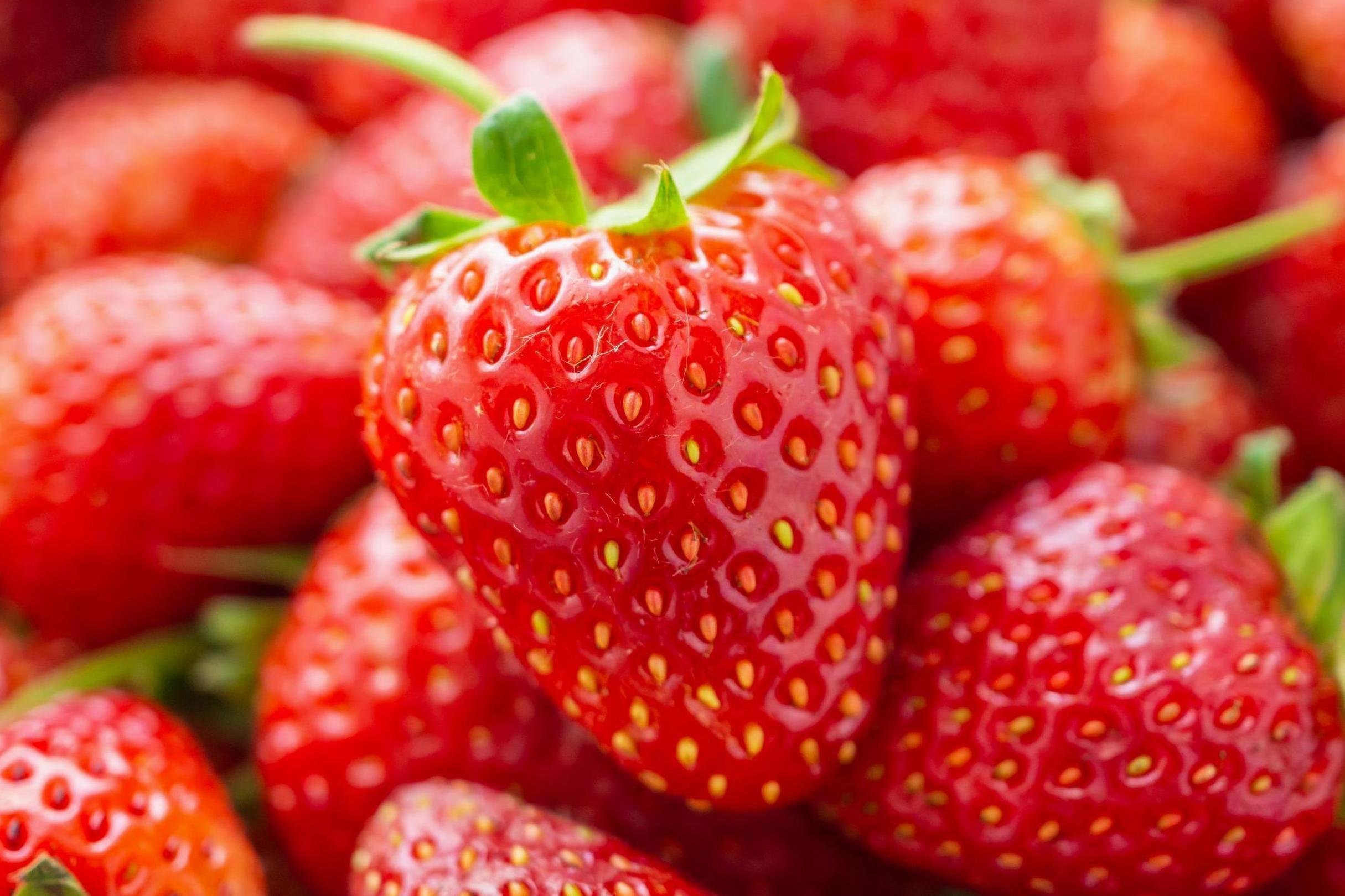 TikTok videos show how to remove worms from strawberries with salt | The  Independent | The Independent