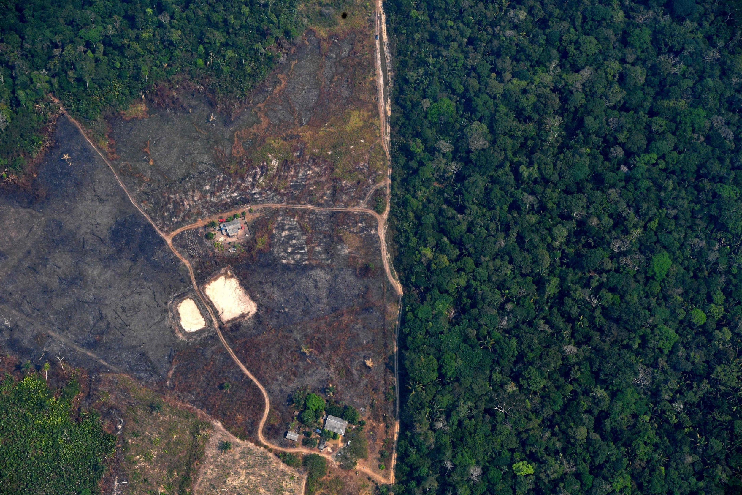 Football-pitch size patch of rainforest lost every six seconds in 2019