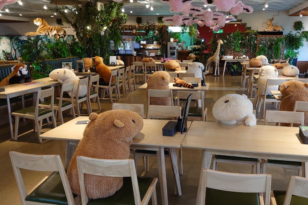 Japanese café uses cuddly capybaras to enforce social distancing
