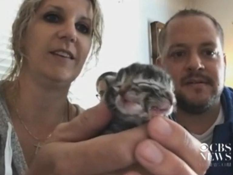 'Both mouths move whenever I feed it': Kitten born with two faces
