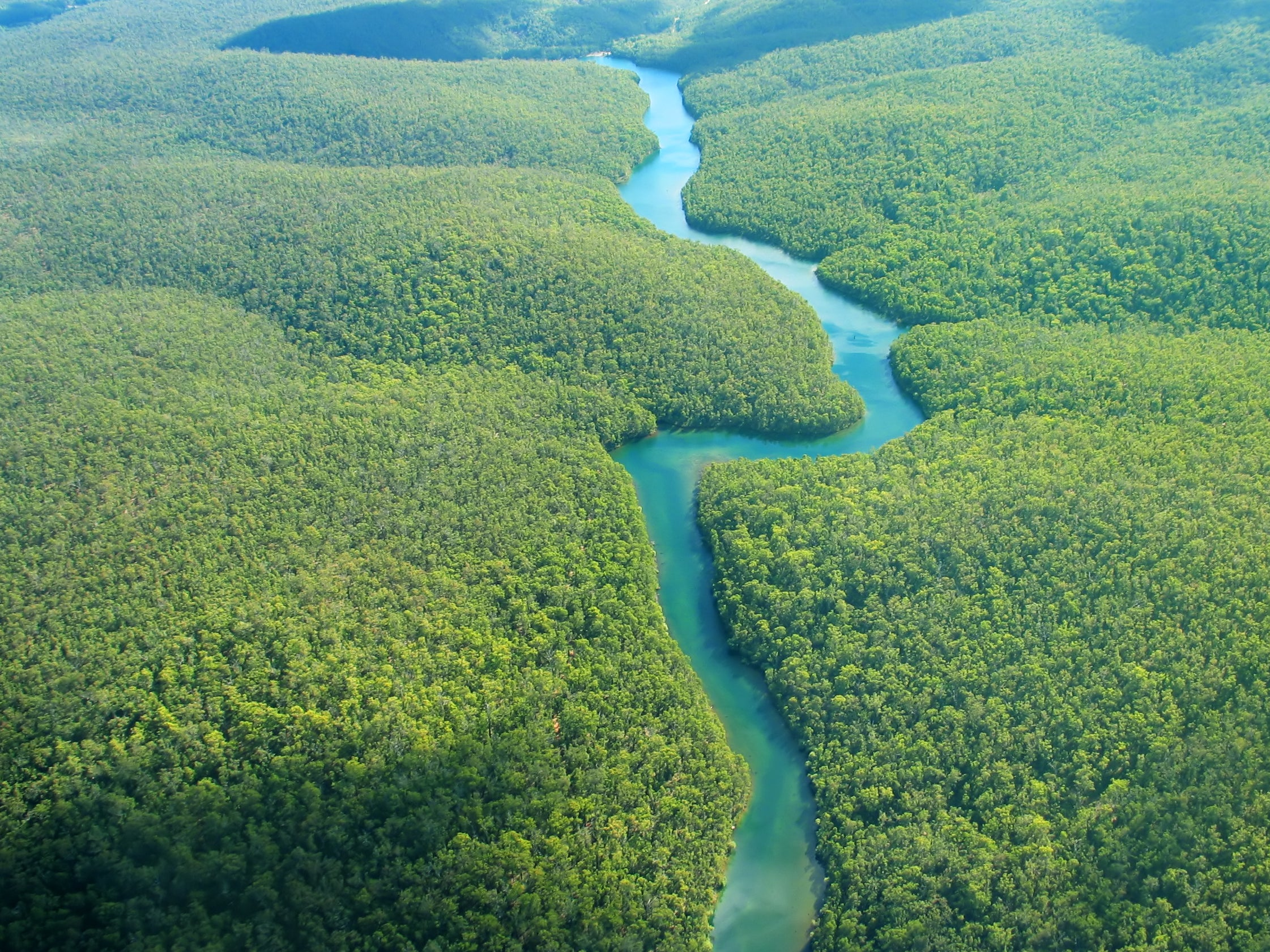Tropical rainforest 'tipping point' identified as scientists call for 'immediate' action to tackle climate change