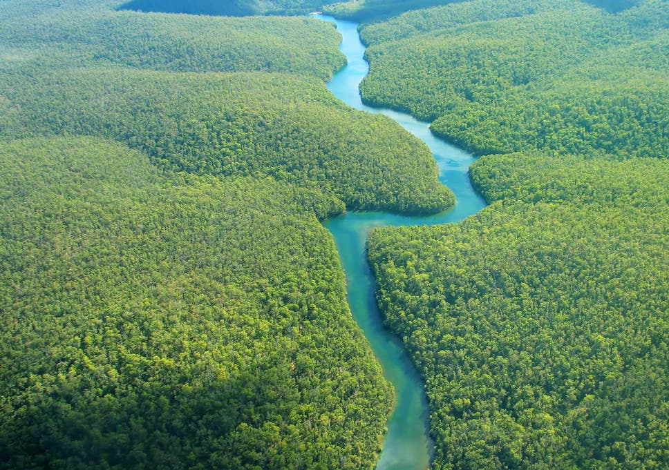The Amazon is among the rainforests most at risk from rising temperatures