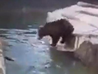 Man fined for animal cruelty and not wearing face mask after wrestling with bear at Polish zoo