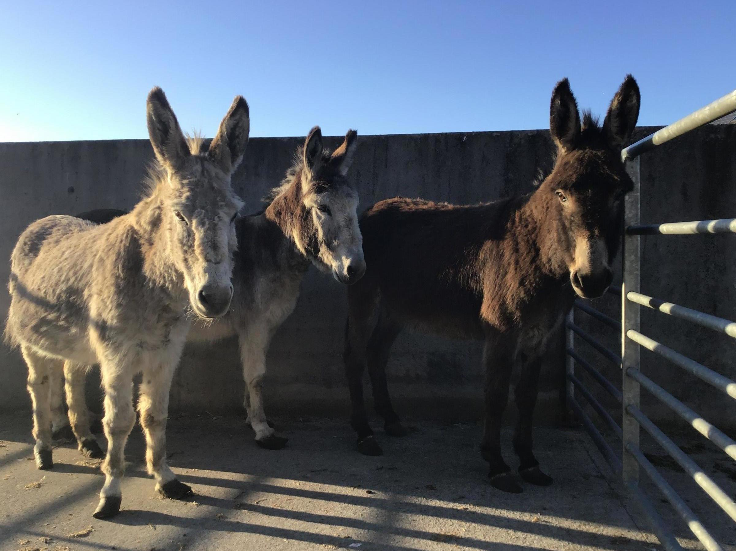 'Unprecedented situation:' Donkey sanctuary inundated with abandoned animals during lockdown