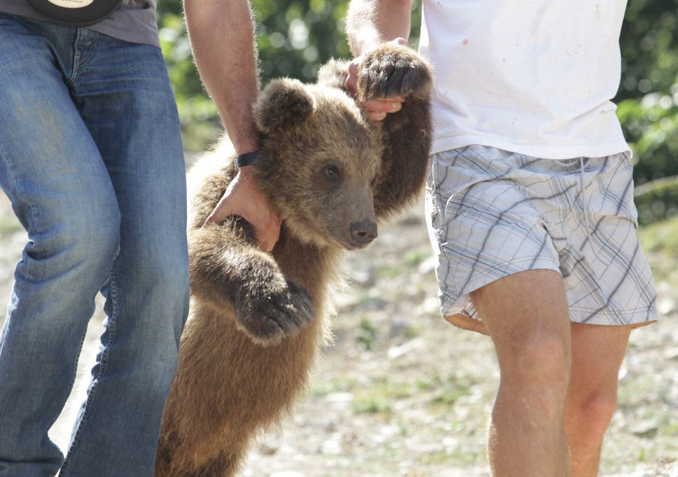 A cub kept by a hotel owner to attract tourists - a common practice in Albania