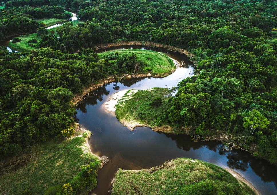 The Mata Atlantica rainforest in Brazil. The government has reduced enforcement leaving the Amazon at risk from illegal logging and land conversion