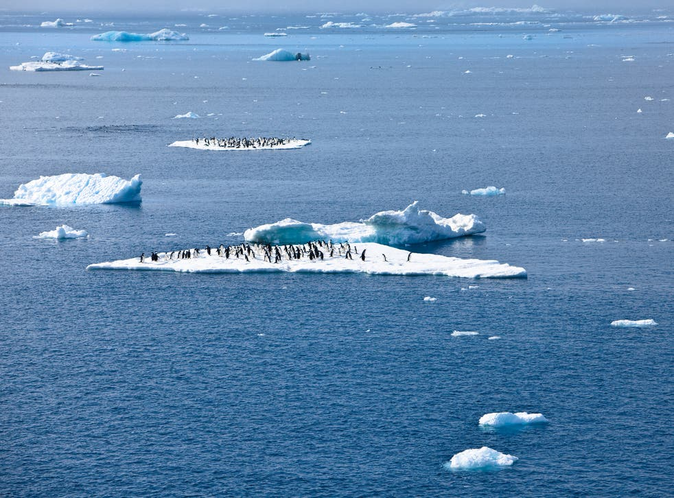 Penguins are among the species dependent on the continued existence of sea ice in Antarctica