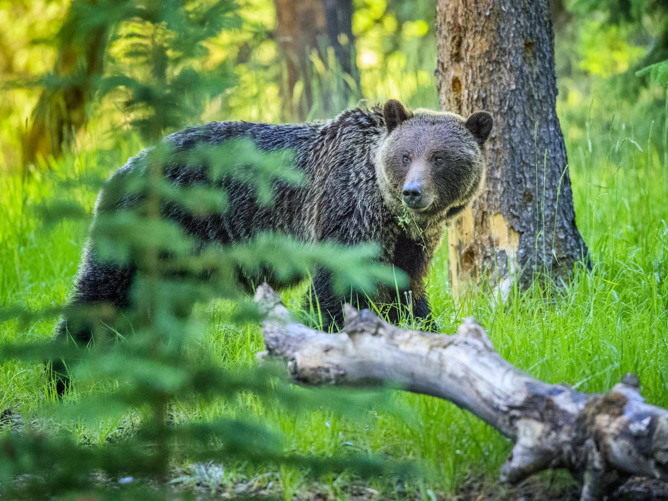 Authorities ordered to kill wild bear after attack on father and son in Italy
