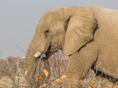 'If we don't buy, they don't die': Tackling the wildlife trade demand