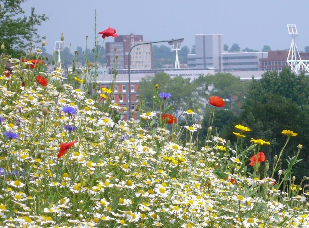 Wildflowers just outside Ipswich, Suffolk