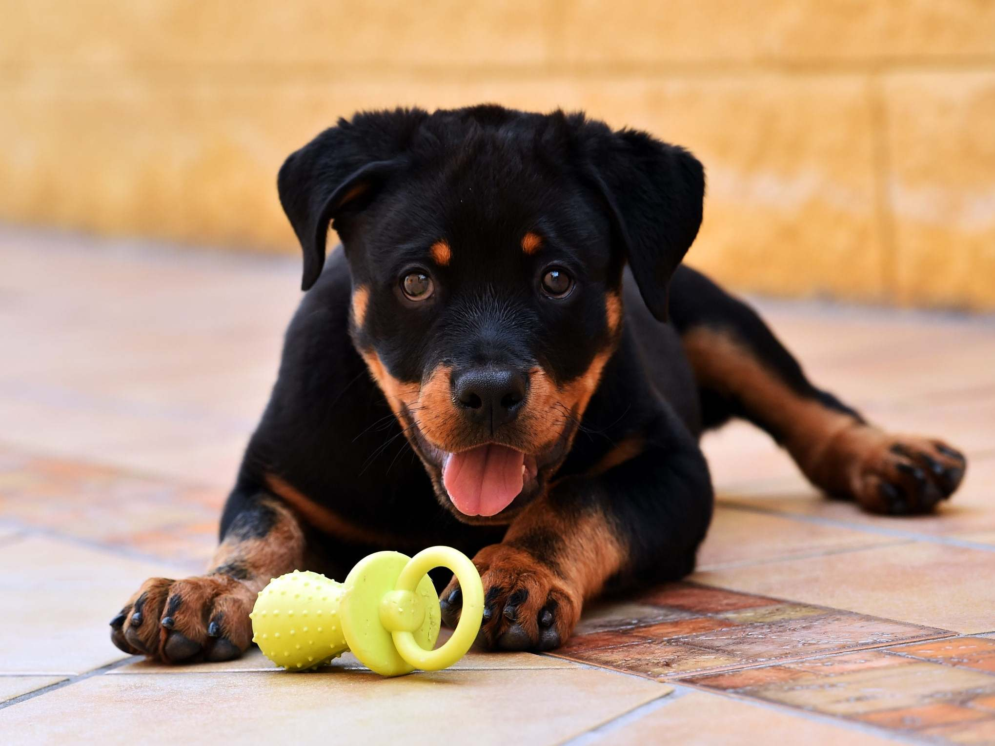 What you need to know before bringing home your new pet