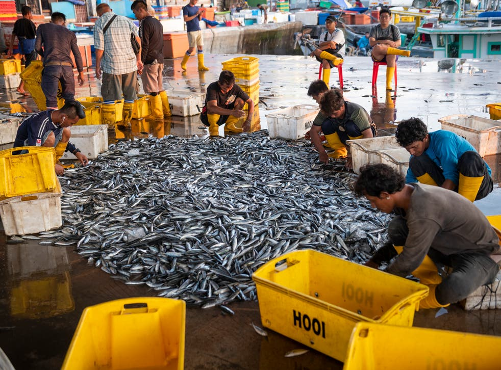 Fishermen sorting through catch of fish in Kota Kinabalu, Malaysia. It takes five times the effort to catch the same amount of fish now as it did in 1950, according to the WEF