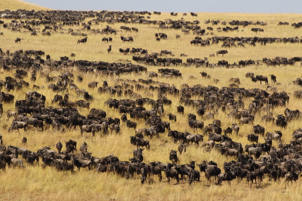 Covid-19 ecotourism collapse could spell disaster in the Masai Mara