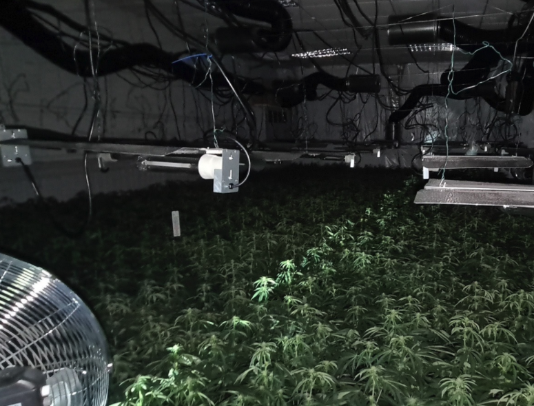 post-image-Police uncover enormous £1.2 million cannabis farm in Oldham