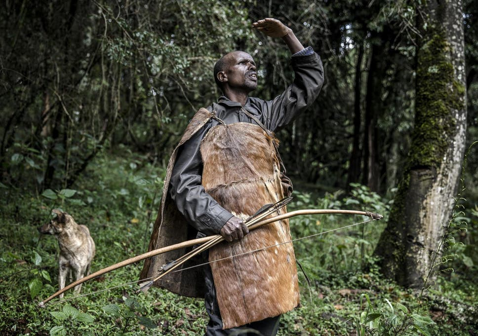 Ogiek hunter Joseph Kipkemoi Lesingo surveys a tree holding a beehive before collecting honey on a cold day