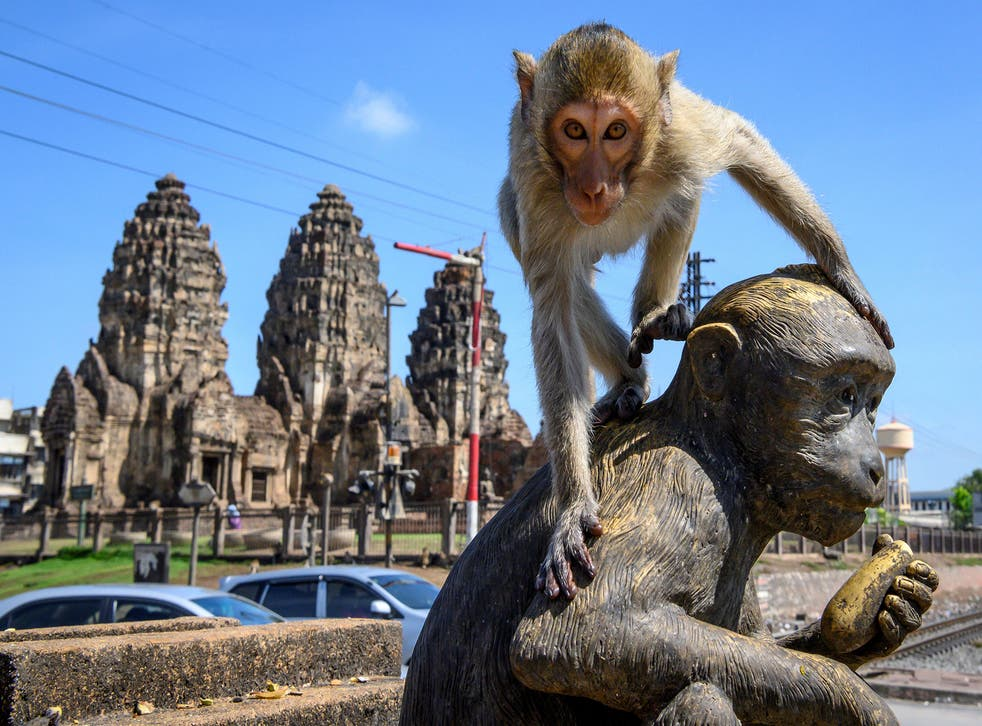 A crab-eating macaque clambers on top of a monkey statue in Lobpuri