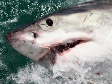 Australian surfer punches shark to save wife in attack