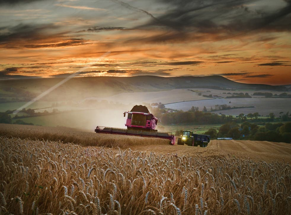 Wheat yields for 2020 are expected to be down by a third, the NFU has said