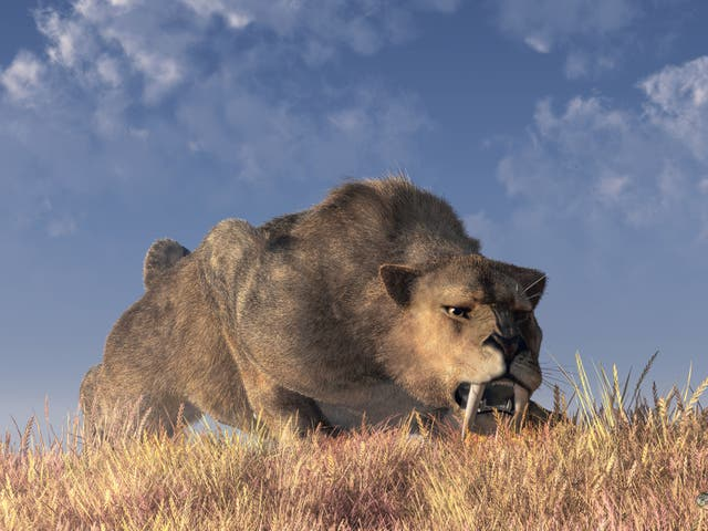 Artist's impression of a saber-toothed cat