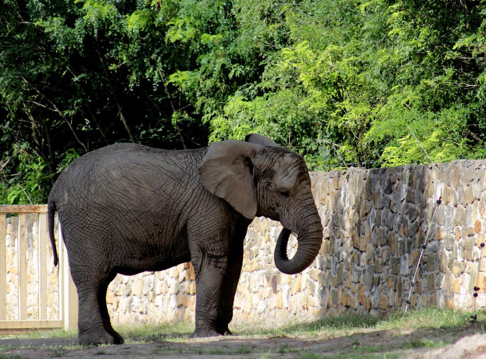 Elephants at the Warsaw Zoo (pictured) are dealing with a death in the herd