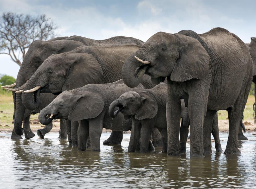 Dead elephants were discovered near Hwange National Park in Zimbabwe