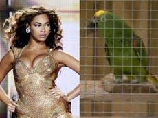 Lincolnshire parrot stuns wildlife park visitors by singing Beyoncé's 'If I Were a Boy'
