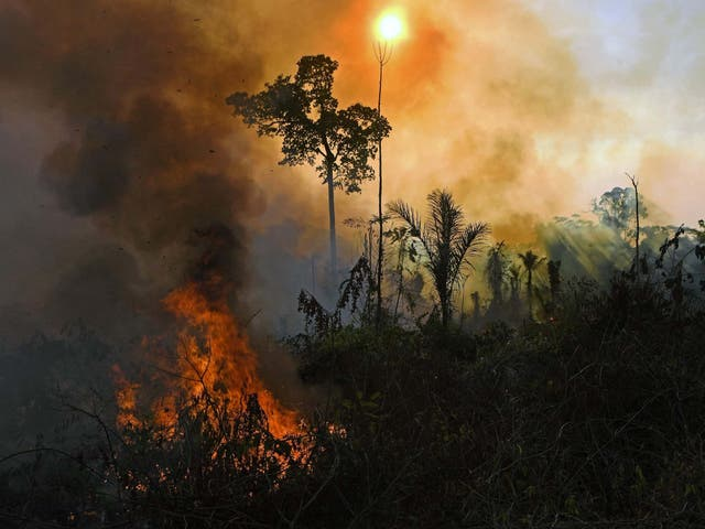 Smoke and flames rise from a fire in the Amazon rainforest reserve, south of Novo Progresso in Para state, Brazil on 15 August, 2020