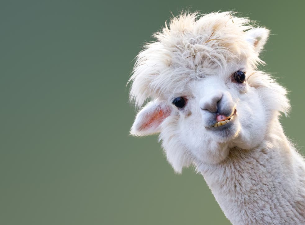 Un ejemplar de esta especie mostró una fuerte respuesta inmune contra el virus
