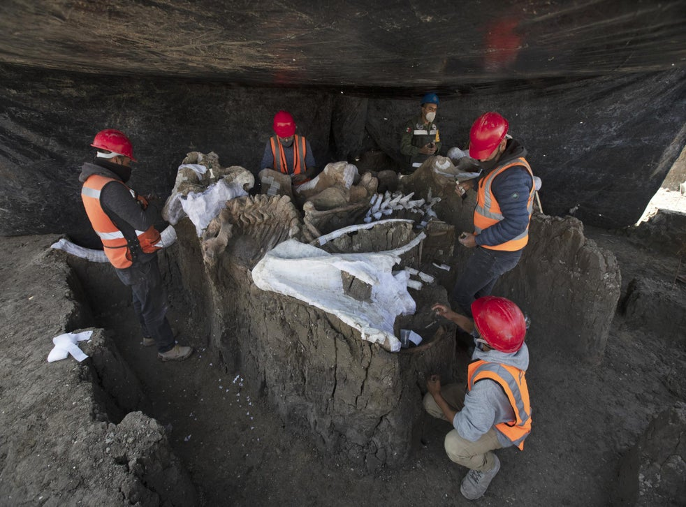 Paleontologists work to preserve the skeleton of a mammoth discovered at Mexican airport site